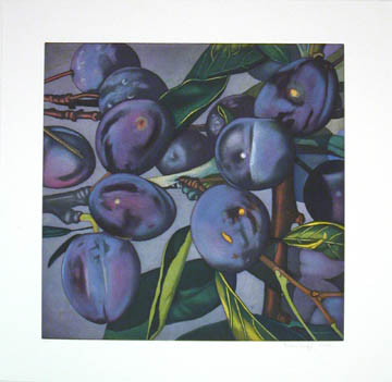 Plums 2005 Etching and aquatint on Zerkall-Bü...