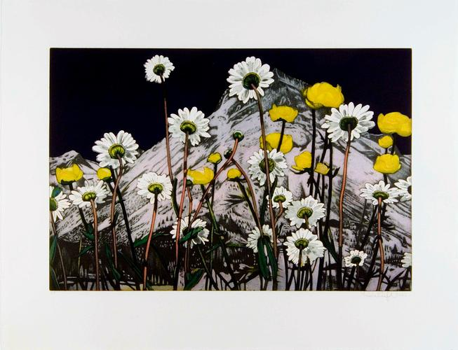 Flowers, 2006 Etching and aquatint on Zerkall-B&uu...