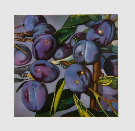 Plums, 2005 Etching and aquatint on Zerkall-Bü...
