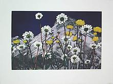 Flowers 2006 Etching and aquatint on Zerkall-B&uum...